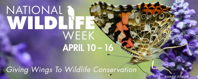 wildlife week1